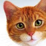 Кошачий паразит меняет поведение человека