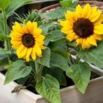 Врачи назвали домашние растения для лечения депрессии