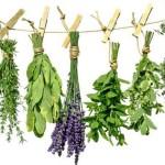 Лекарственные растения оберегают здоровье