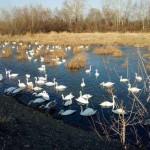 Человек может инфицироваться птичьим гриппом при тесном контакте с птицей