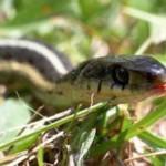 Буковинцев кусают змеи