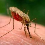 Студент, проживающий в общежитии Черновцы, заболел малярией