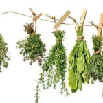 За здоровьем – к нетрадиционной медицине